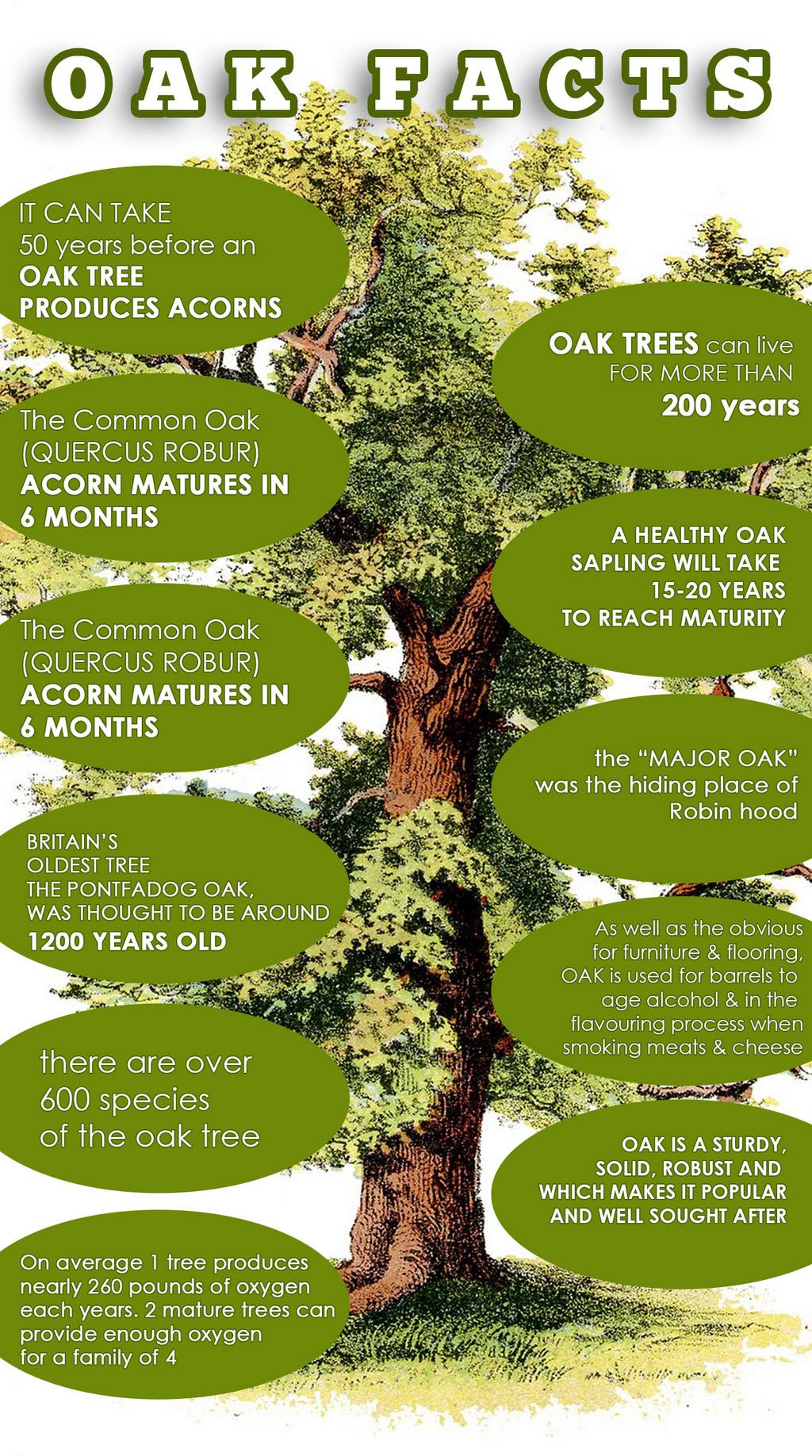 Facts About The Majestic Oak Tree By
